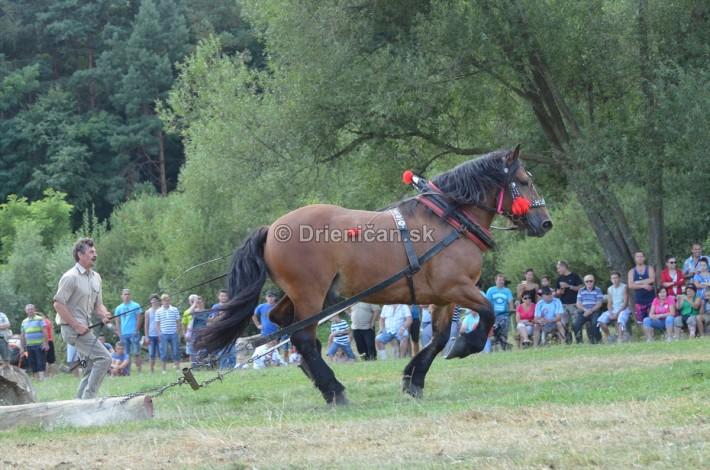 furmanske preteky o zlaty kantar 2013 Lutina_008