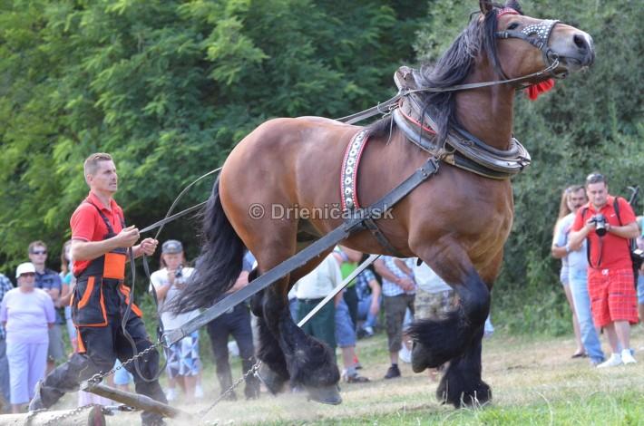 furmanske preteky o zlaty kantar 2013 Lutina_013