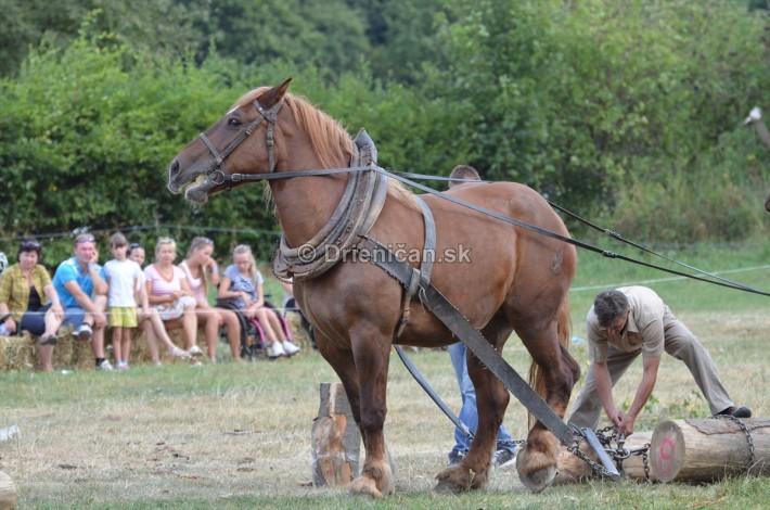 furmanske preteky o zlaty kantar 2013 Lutina_019