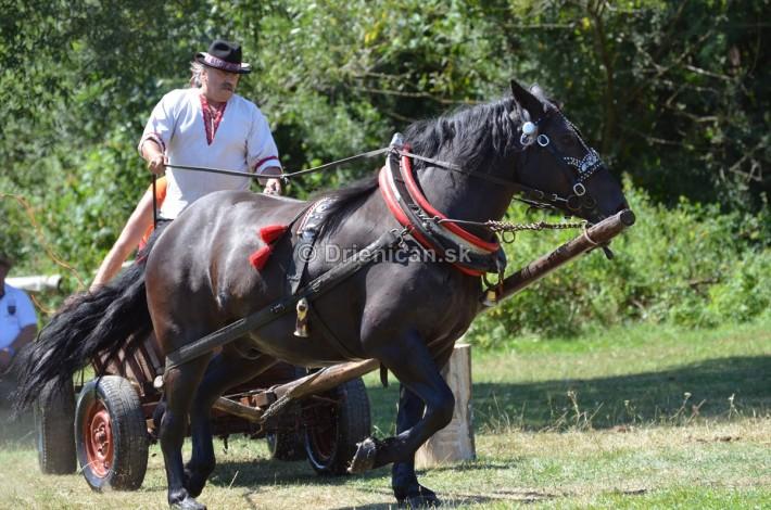 furmanske preteky o zlaty kantar 2013 Lutina_043