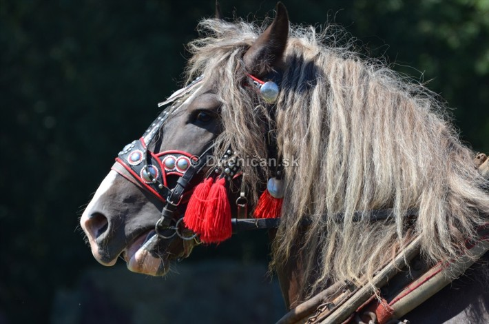 furmanske preteky o zlaty kantar 2013 Lutina_045