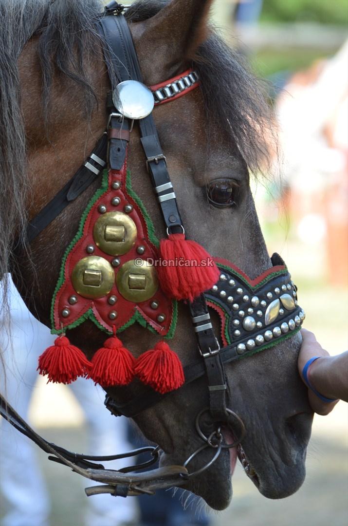 furmanske preteky o zlaty kantar 2013 Lutina_053