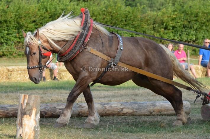furmanske preteky o zlaty kantar 2013 Lutina_080