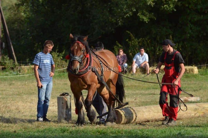 furmanske preteky o zlaty kantar 2013 Lutina_083