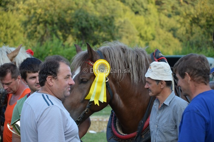 furmanske preteky o zlaty kantar 2013 Lutina_103