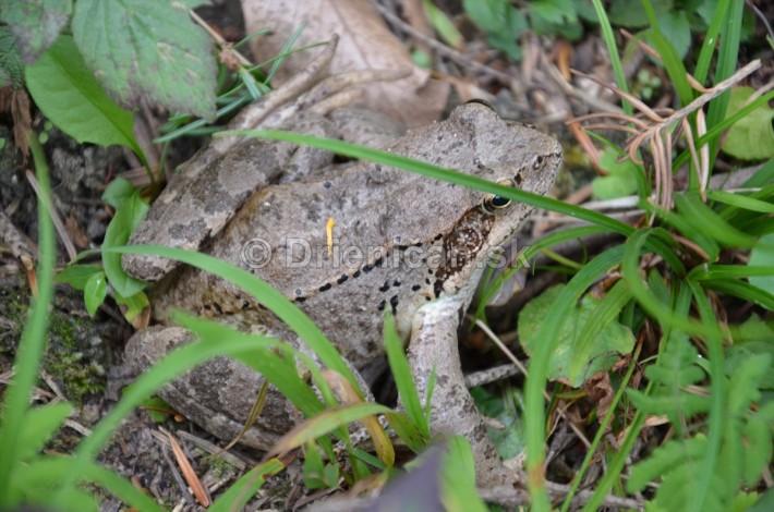 Aj jedna žaba kdesi v strede lesa hľadala prameň vody,ktorý by ju osviežil.