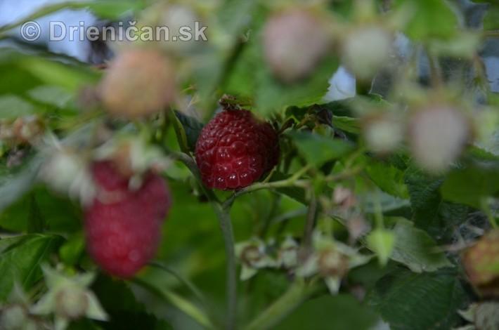 zo zahrady_05