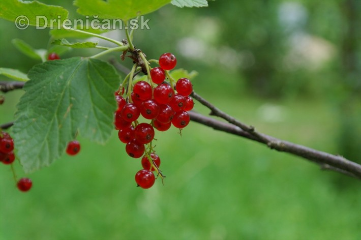 zo zahrady_43