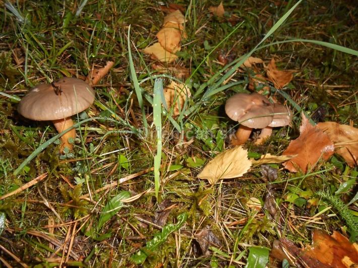 Huby Hriby v suchom lese_05