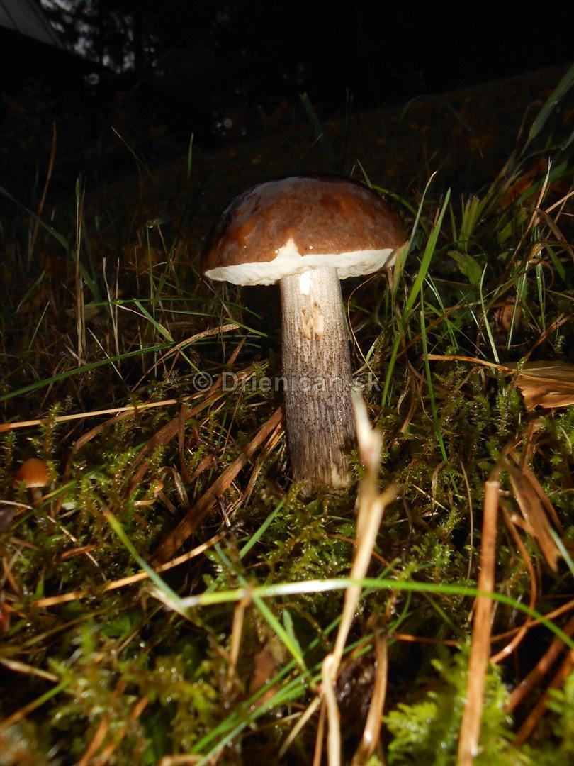 Huby Hriby v suchom lese_06