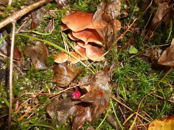 Huby Hriby v suchom lese_13