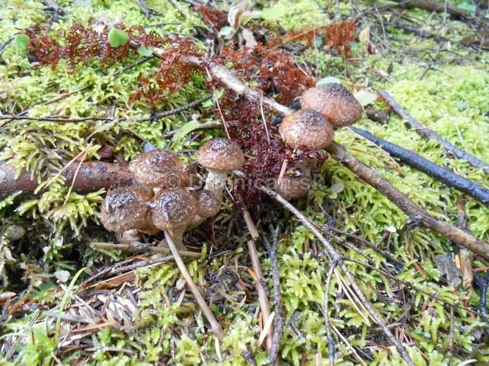 Huby Hriby v suchom lese_18