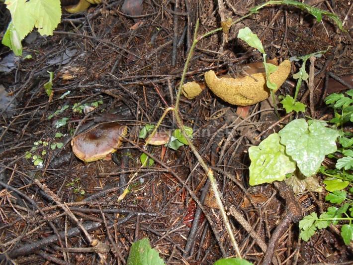 Huby Hriby v suchom lese_21