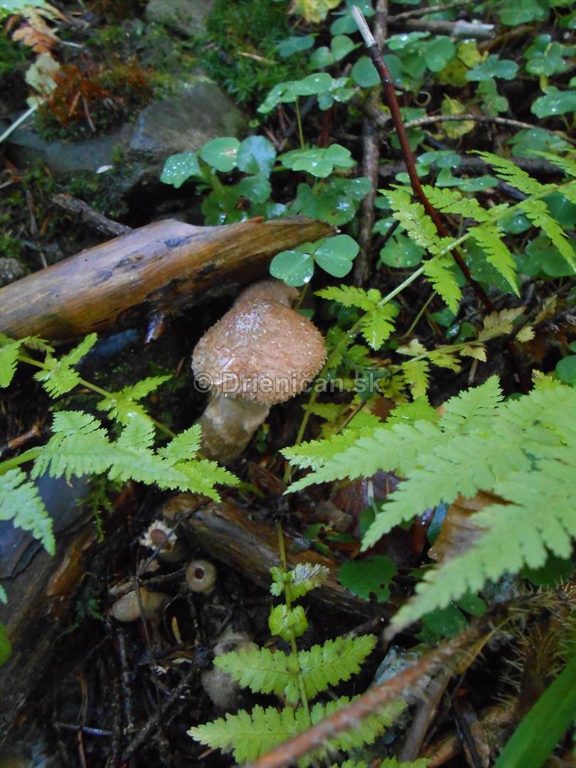 Huby Hriby v suchom lese_24