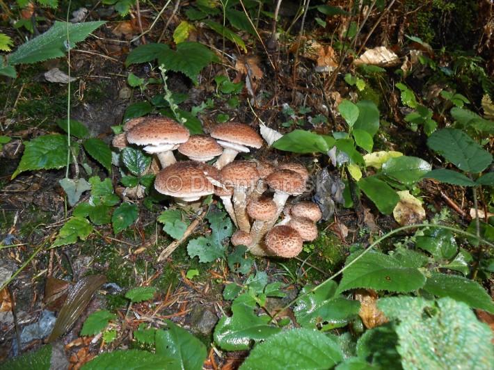 Huby Hriby v suchom lese_25