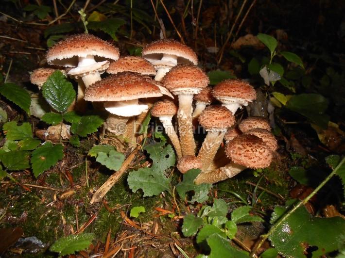 Huby Hriby v suchom lese_26