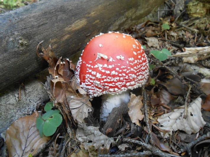 Huby Hriby v suchom lese_31