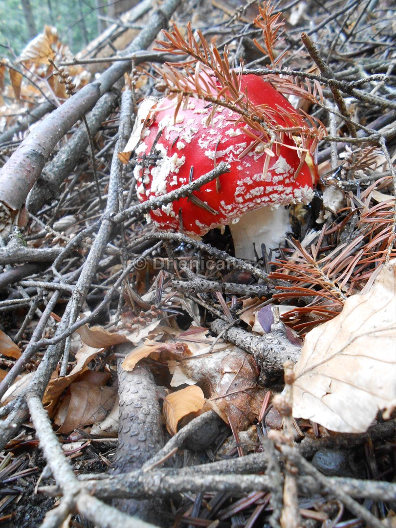 Huby Hriby v suchom lese_34