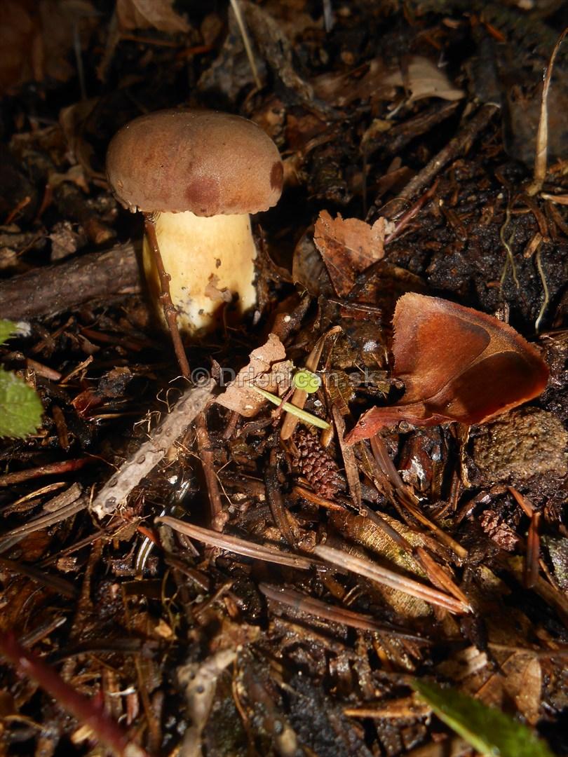 Huby Hriby v suchom lese_38