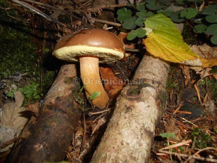 Huby Hriby v suchom lese_39