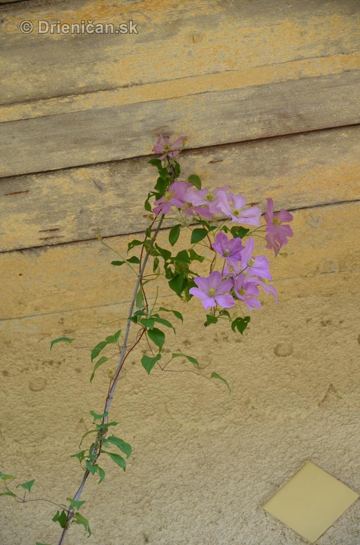 drienica kvety balkony_09
