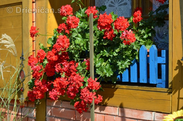 drienica kvety balkony_15