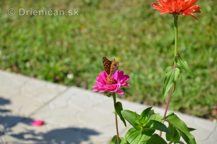 drienica kvety balkony_18