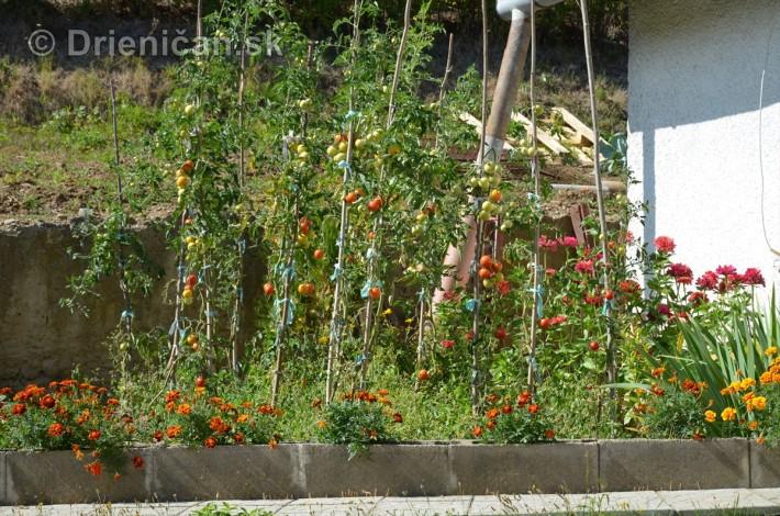 drienica kvety balkony_19