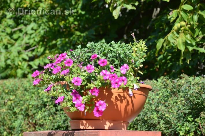 drienica kvety balkony_21