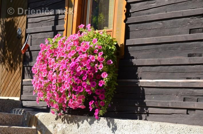 drienica kvety balkony_28