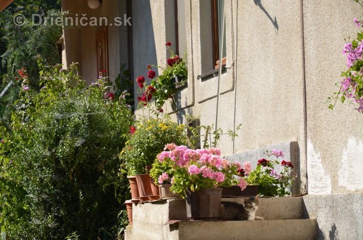 drienica kvety balkony_36