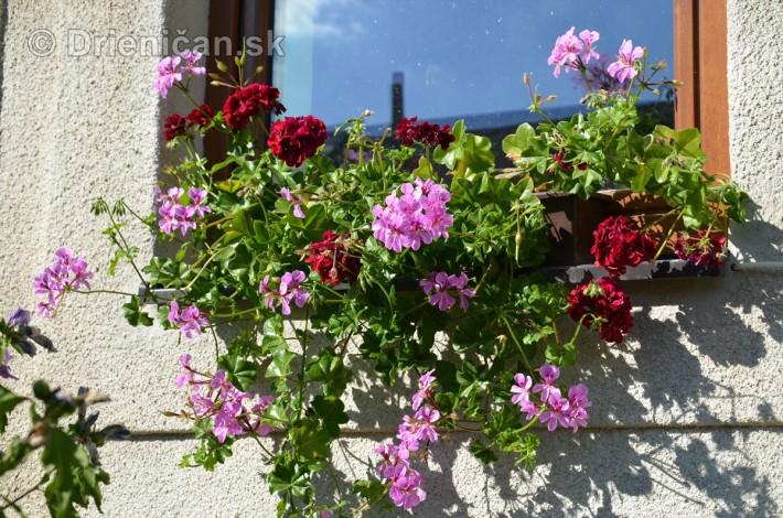 drienica kvety balkony_38