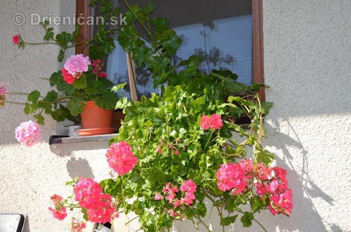 drienica kvety balkony_39