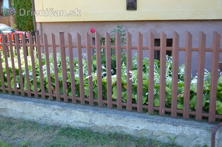 drienica kvety balkony_45