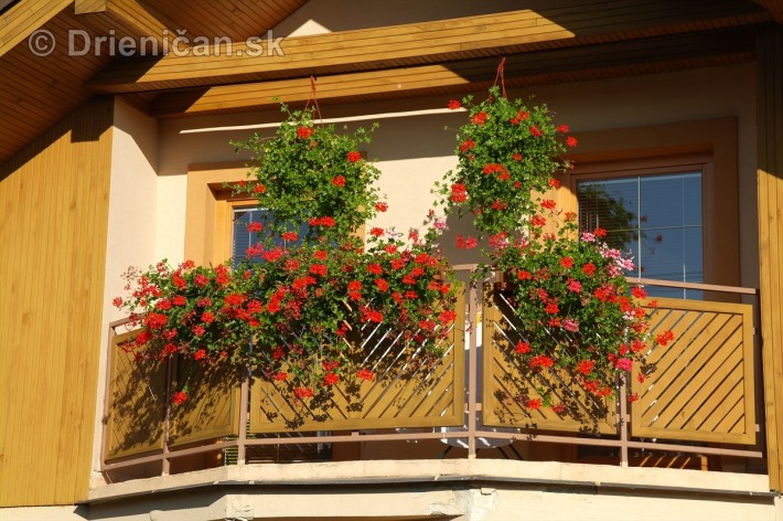 drienica kvety balkony_60