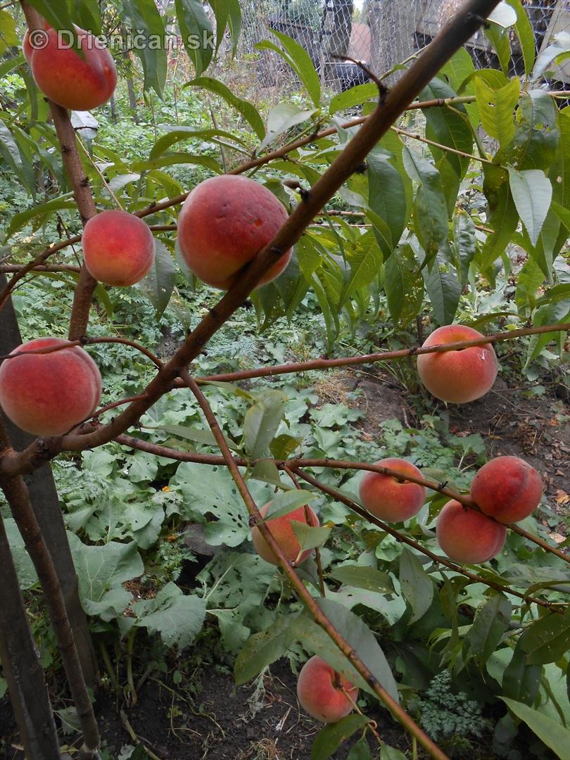 septembrova uroda pole a zahrada_06