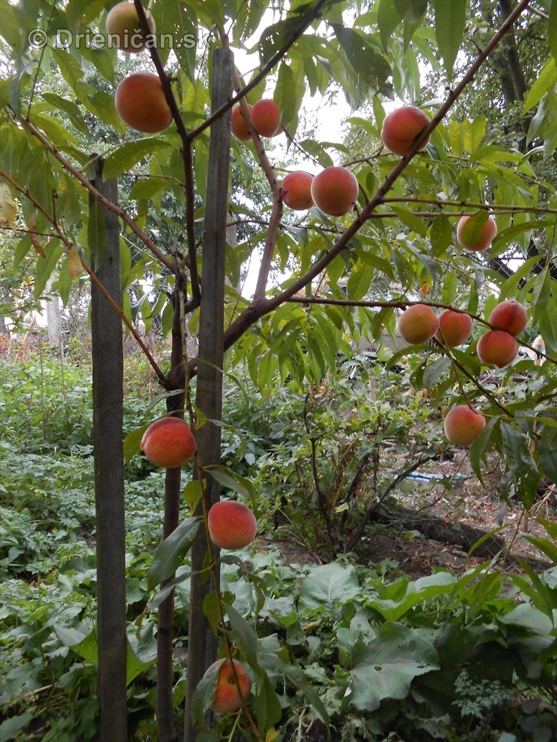 septembrova uroda pole a zahrada_09