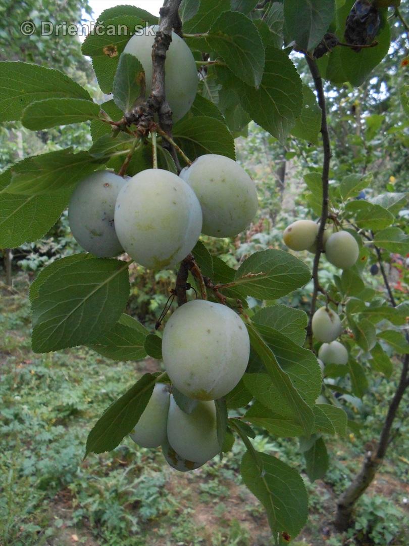 septembrova uroda pole a zahrada_11