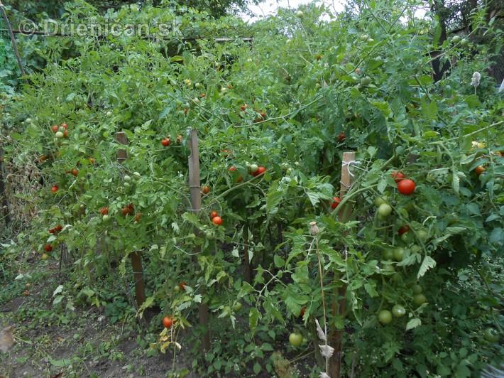 septembrova uroda pole a zahrada_14