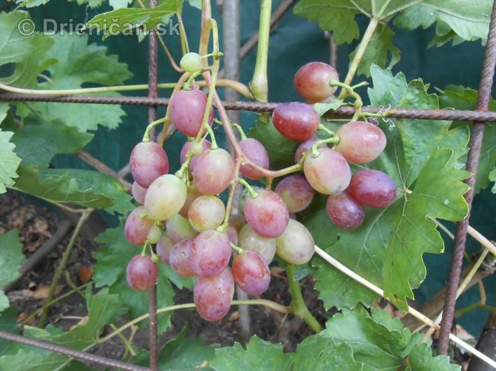 septembrova uroda pole a zahrada_16