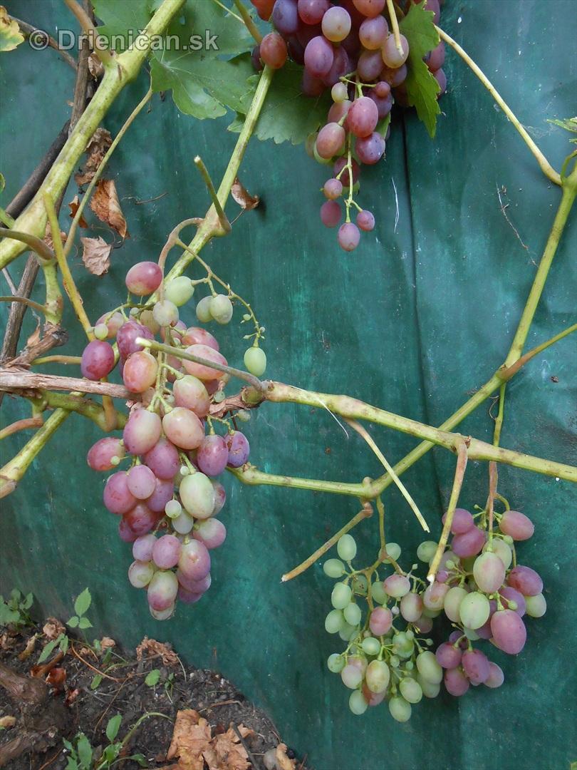 septembrova uroda pole a zahrada_17
