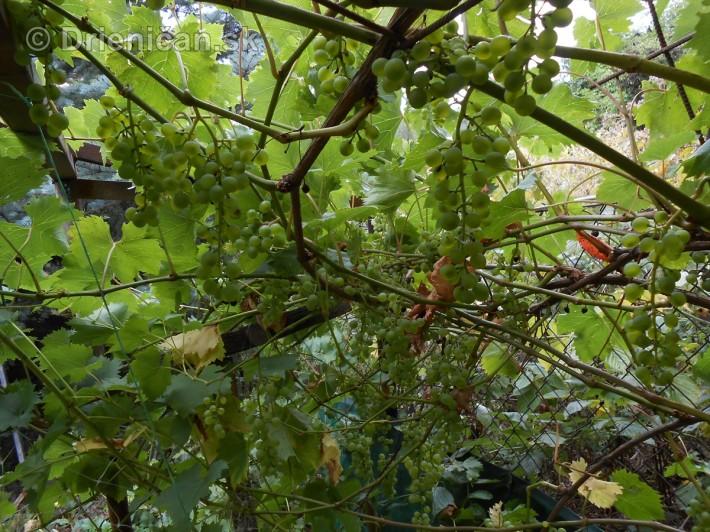 septembrova uroda pole a zahrada_18