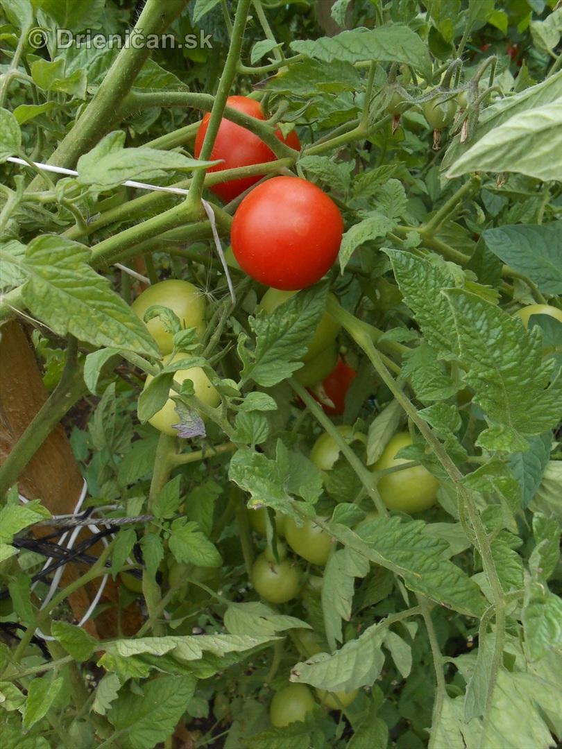 septembrova uroda pole a zahrada_20
