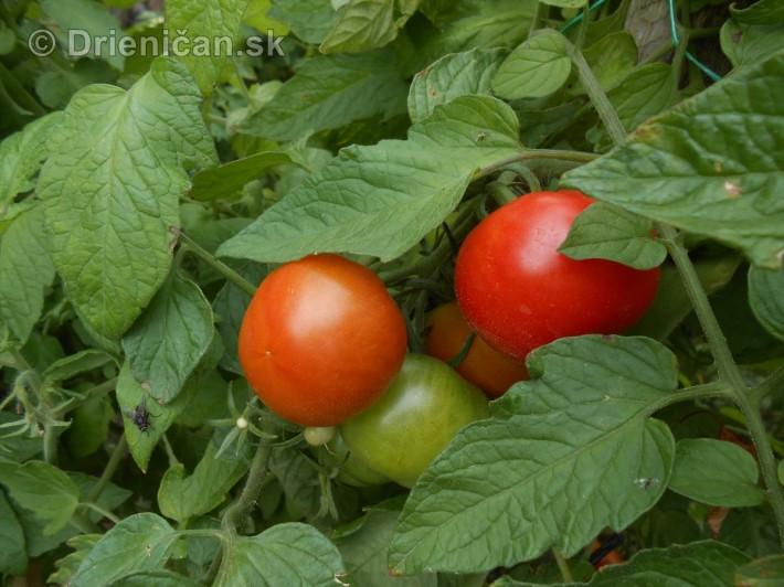 septembrova uroda pole a zahrada_21
