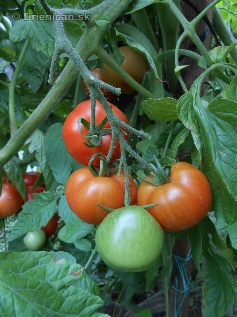 septembrova uroda pole a zahrada_22