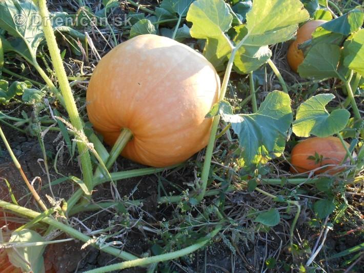 septembrova uroda pole a zahrada_24