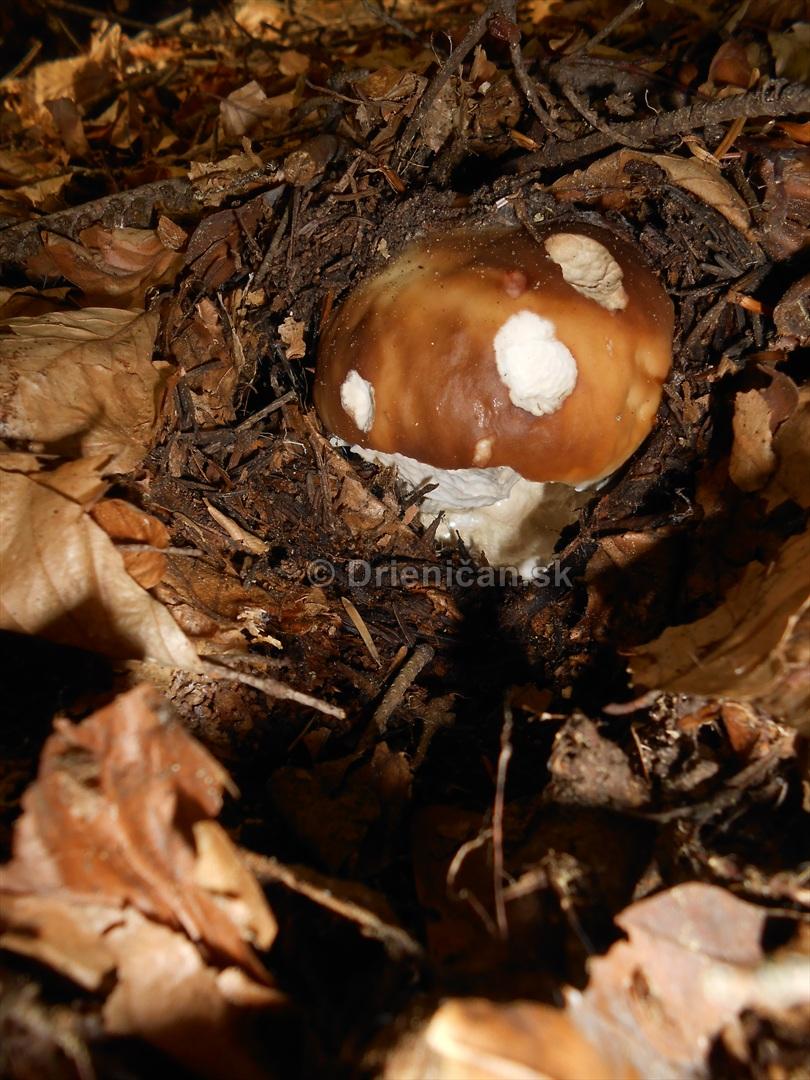 huby v oktobri_08