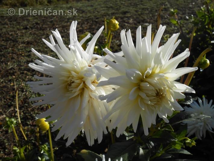 Októbrové kvety v záhradke