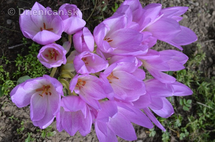 kvety oktober zahrada_03