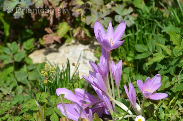 kvety oktober zahrada_05